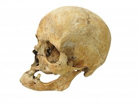 foto of cranium  - Old archaeological find human skull cranium isolated on white background - JPG