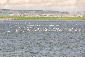 picture of larnaca  - Flamingos in Larnaca Salt Lake  - JPG