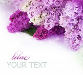 picture of may-flower  - Spring Lilac Border - JPG