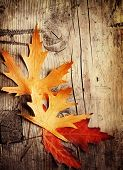 stock photo of fall leaves  - Autumn Leaves over wooden backgound - JPG