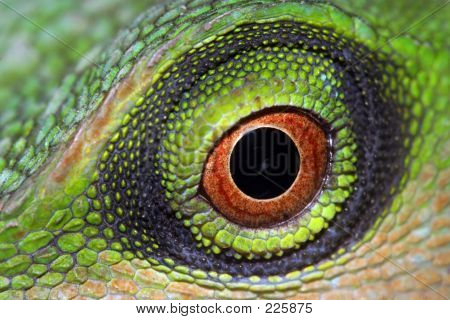 Picture or Photo of Eye of a green tree lizard.