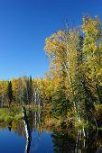 Calm Fall Day In Alaska poster