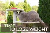 Motivation quote TIME TO LOSE WEIGHT and cute overweight cat playing with scratching post outdoors poster