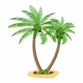 Tropical Green Palm. Jungle Leaves. Coconut Palm, Monstera, Fan Palm, Rhapis. Natural Leaf, Exotic B poster