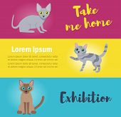 Cards With Cats. Take Me Home. Vector. Cartoon. Isolated Art Flat poster