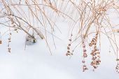Shrub In The Snow In Winter. Beautiful Bushes In Winter. poster