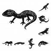 Isolated Object Of Zoo And Environment Sign. Collection Of Zoo And Reptile Stock Symbol For Web. poster