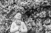 Girl Enjoying Floral Aroma. Pollen Allergy Concept. Kid On Pink Flowers Sakura Tree Background. Alle poster