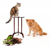 image of disobedient  - Cat and dog breaking things after a chase - JPG
