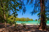 Idyllic tropical beach with huge trees in Ko Phayam island, Thailand poster