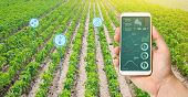 Farmer Hold A Smartphone On A Background Of A Field With A Pepper Plantations. Agricultural Startup. poster