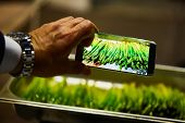 Grill Asparagus Spears Take Picture On Camera Phone poster