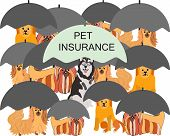 Husky Dog Under Umbrella With Note Pet Insurance. Different Dogs Under Grey Umbrella As Sign Of Not  poster