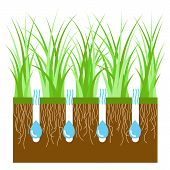 Lawn Aeration For Active Plant Growth. Free Access Of Water And Air To Soil. Lawn Grass Care, Garden poster
