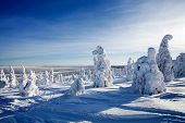 stock photo of laplander  - Beautiful sunny winter landscape in Lapland Finland  - JPG