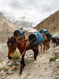 picture of skardu  - Pack Horses in the Karakorum Mountains Pakistan - JPG