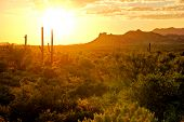 picture of superstition mountains  - Sunset view of the Arizona desert with cacti and mountains