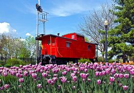 foto of caboose  - Bright red caboose with Dutch tulip field.