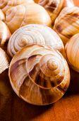 picture of escargot  - Group of snail shells escargots de Bourgogne under the sunlight - JPG