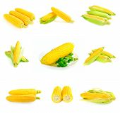 image of corn-silk  - Set from six images with corn cobs - JPG