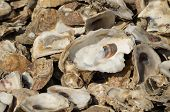 picture of landfills  - Oyster shells used for landfill in Palacios - JPG