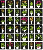 image of peyote  - icons on black background theme houseplants and flowers - JPG