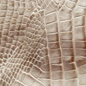 picture of lizard skin  - Crocodile skin for texture and background - JPG