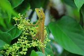 image of chameleon  - Chameleon Island branches - JPG