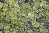picture of green algae  - Grunge old stone background with green moss - JPG