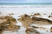 picture of green algae  - Ocean shore background  - JPG