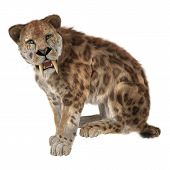 stock photo of saber tooth tiger  - 3D digital render of a sitting smilodon or a saber toothed cat isolated on white background - JPG