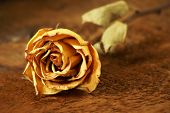 pic of keepsake  - A closeup shot of a dried rose laying on some textured wood - JPG