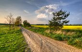 pic of dirt road  - Spring landscape with dirt road between fields