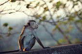 pic of ignorant  - Monkey turned away ignoring the people and pretending that offended - JPG