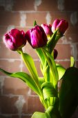 stock photo of basement  - bouquet of pink tulips in the dark basement - JPG