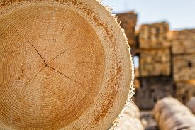 image of lumber  - Dry woodpile of cut lumber ready for forestry industry  - JPG