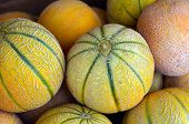 foto of cantaloupe  - Cantaloupe melons on display in the market - JPG
