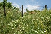 foto of barbed wire fence  - fence with barbed wire in the unit on the coast of Bulgaria in the spring - JPG