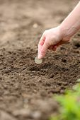 foto of rich soil  - Female hand planting coin into soil - JPG