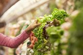 foto of close-up middle-aged woman  - Close Up Of Woman Choosing Salad In Supermarket - JPG