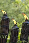 picture of citronella  - Bamboo citronella torches to repell mosquitoes and other insects - JPG