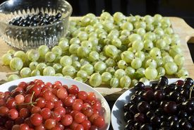 image of black-cherry  - Bowls of black currants, red and black cherries and gooseberries on a wooden chopping board ** Note: Shallow depth of field - JPG