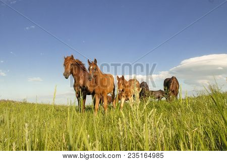 Horse Foal On Pasture Foal