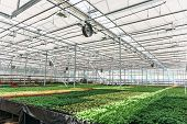Inside New Modern Hydroponic Greenhouse Or Hothouse For Cultivation Of Decorative Flowers And Plants poster