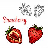 Strawberry Fruit Isolated Sketch Of Garden Or Wild Forest Berry. Whole And Half Of Ripe Red Strawber poster