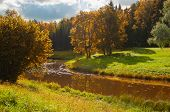 Autumn Forest Landscape. Yellowed Forest Autumn Trees At The Bank Of The Forest River In Sunny Autum poster
