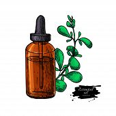 Marjoram Essential Oil Bottle And Marjoram Leaves Hand Drawn Vector Illustration. Isolated Plant Dra poster