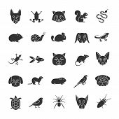 Pets Glyph Icons Set. Exotic Animals. Rodents, Birds, Reptiles, Insects, Dogs, Cats. Silhouette Symb poster