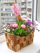 picture of pot-bellied  - Decoration of balcony hyacinths bellis and primrose Spring flowers on a balcony - JPG