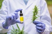 A Bottle Of Cbd Hemp Oil And Cannabis Leaves In The Hands Of Researchers. Researcher Background. Med poster